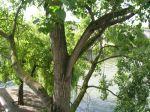Seine River Walk